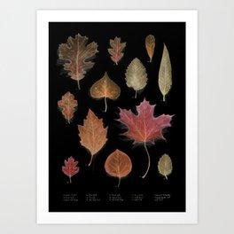 Autmunal Cartography BLK Art Print