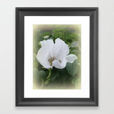 Hedge Rose Framed Art Print