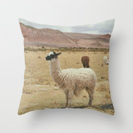 Lama Pampa bolivie Throw Pillow