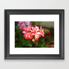some nice flowers Framed Art Print