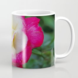 Double Delight Rose - Red and cream beauty Coffee Mug