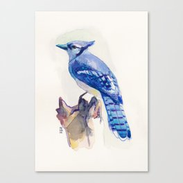 Blue Jay Bird Watercolour Canvas Print