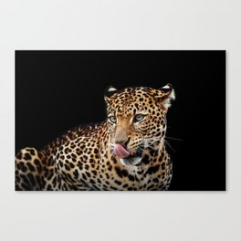 Leopard portrait on dark background Canvas Print