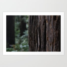 Bark on Tree Art Print