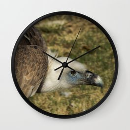 Griffon vulture Wall Clock