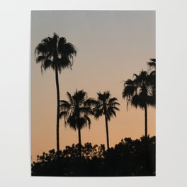 Palm Trees and Sunsets Poster