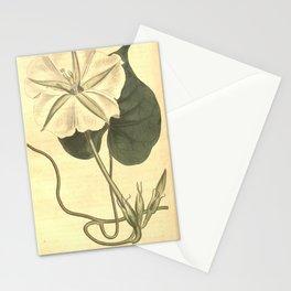 Flower 752 ipomoea bona nox Prickly Ipomoea10 Stationery Cards