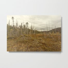 cloudy fall day Metal Print