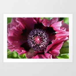 Heart Of  A Poppy Art Print