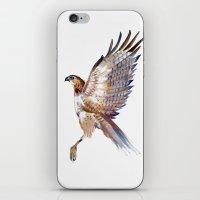 hawk iPhone & iPod Skins featuring hawk by Jenny Highsmith