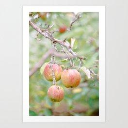 Orchard No.1 Art Print