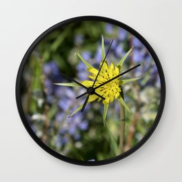 Yellow salsify wildflower against lupine Wall Clock