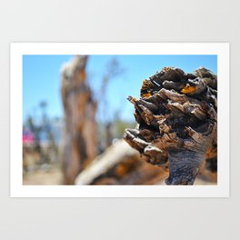 Deadwood Art Print