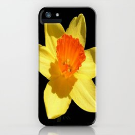 Spring Daffodil Isolated On Black iPhone Case