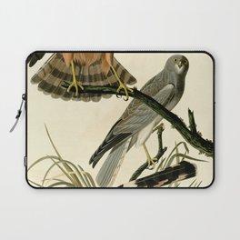 Marsh Hawk (Circus hudsonius) Laptop Sleeve