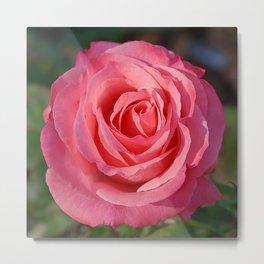 'Cherish' Rose Metal Print