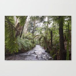 Under the Tree Ferns Canvas Print