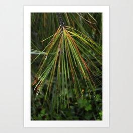 Sappy Multicolor Pine Needles Art Print