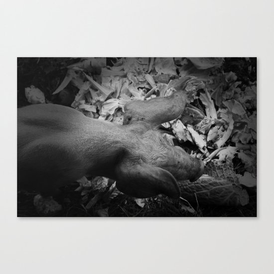 MY LITTLE PIG (Us And Them) Canvas Print