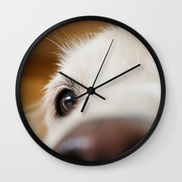Fluffy Tetriever Close up Wall Clock