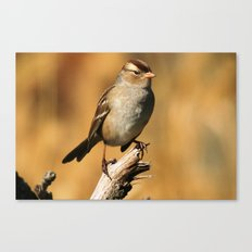 White-crowned Sparrow Canvas Print