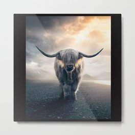 highland cattle scotland Metal Print