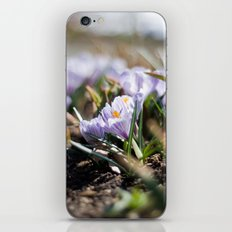 Spring Light iPhone & iPod Skin
