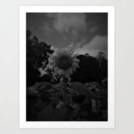 HD Black and White Sunflower Art Print