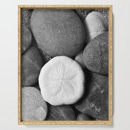 Sand Dollar on Rocks Serving Tray