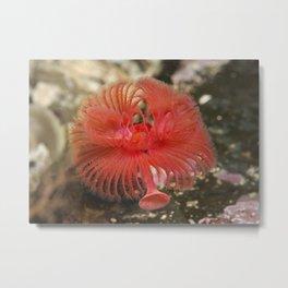 Splash of Color Underwater Metal Print