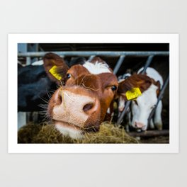 The Curious Cow Art Print