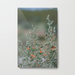 Desert Wildflower - 2 Metal Print