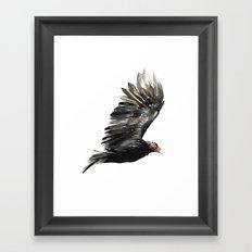 Cathartes Aura Framed Art Print