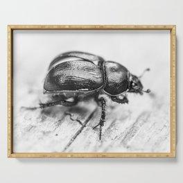 Black Beetle Serving Tray
