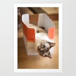 The cute cat in the box Art Print