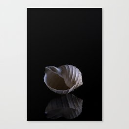 A spiraling sea shell is captured aganst a black background Canvas Print