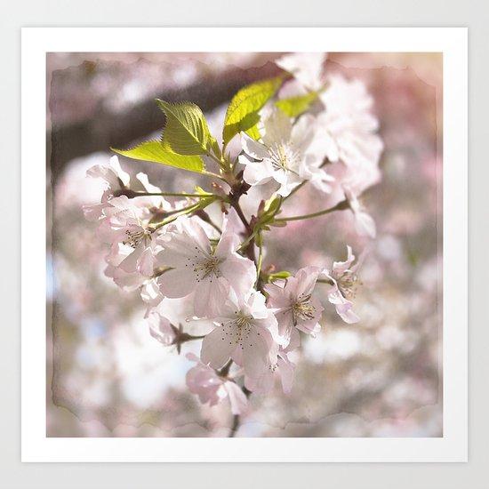 Tender Blossoms Art Print