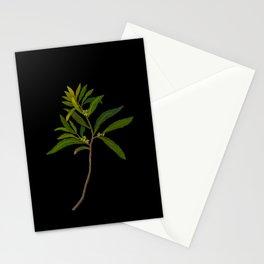 Ilex Angustifolia Mary Delany Vintage Floral Collage Botanical Flowers Black Background Stationery Cards