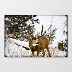 Upper Little Bear Buck Canvas Print