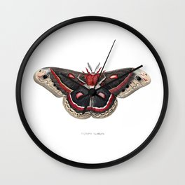 Cecropia Moth Wall Clock
