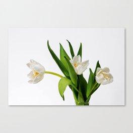 White Tulip Flowers On White Canvas Print