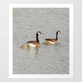 Canadian Geese Family Art Print