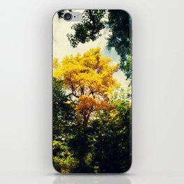fall in Central Park iPhone Skin