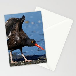 Black Oystercatcher Dance | Wildlife Photography | Birds Stationery Cards