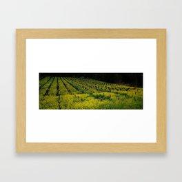 Grapevine Geyserville Framed Art Print