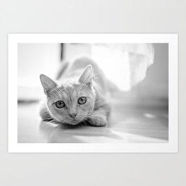 The pouncing kitty - BW Art Print