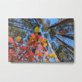Dogwood and Pines Metal Print