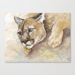 Captivated Mountain Lion Canvas Print