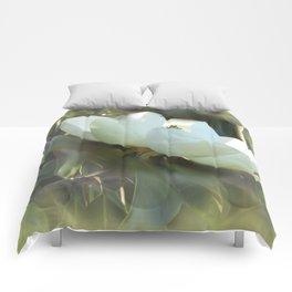 Magnolia Kiss Comforters