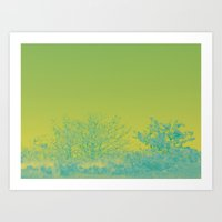 That soft end of the day Art Print